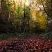Autumns Light 02