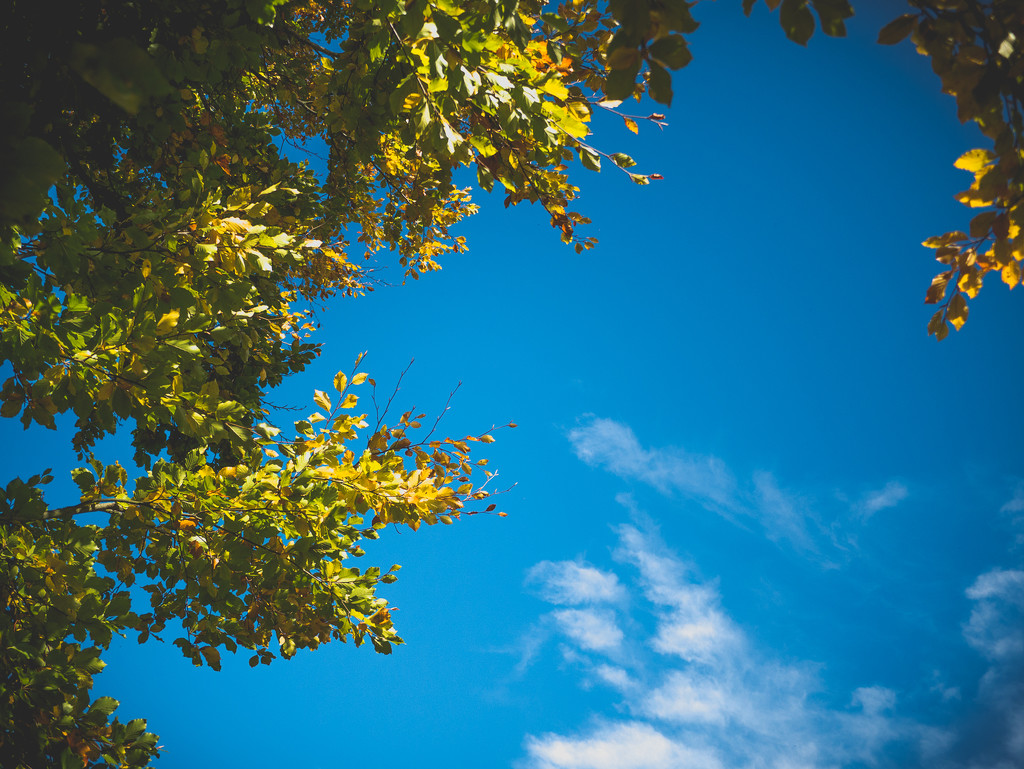 Tree and Sky by newbank