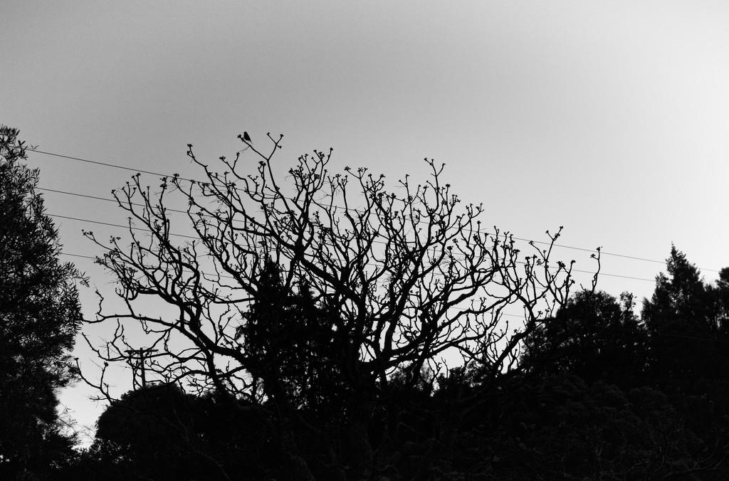 Twilight trees by kiwinanna