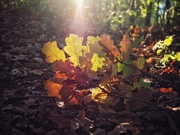 26th Oct 2020 - Leaves and shadow