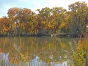 26th Oct 2020 - Autumn Reflection