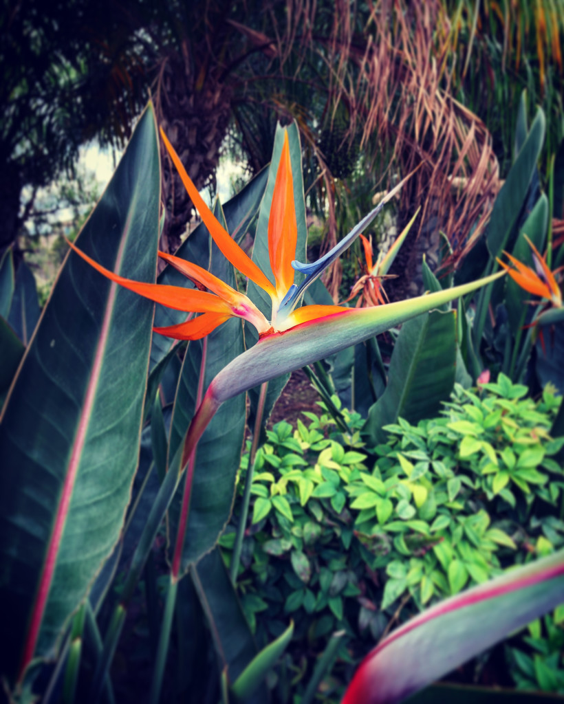Bird of Paradise  by loweygrace