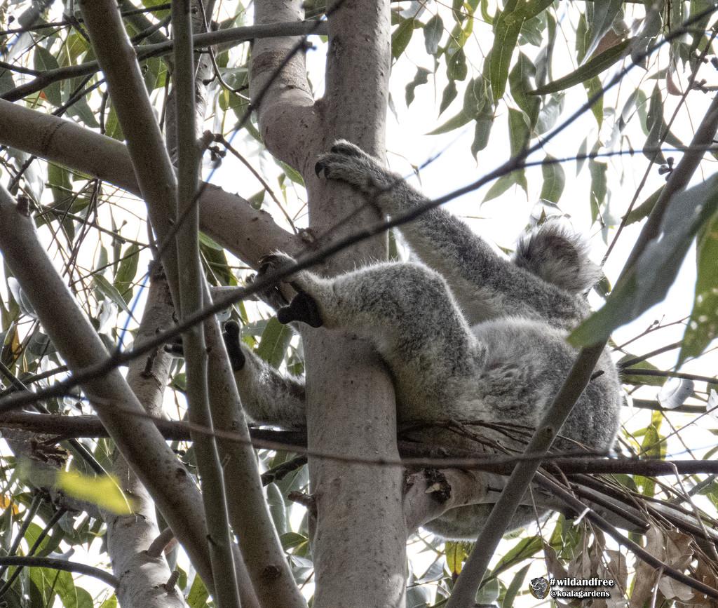 I have a suspicion by koalagardens