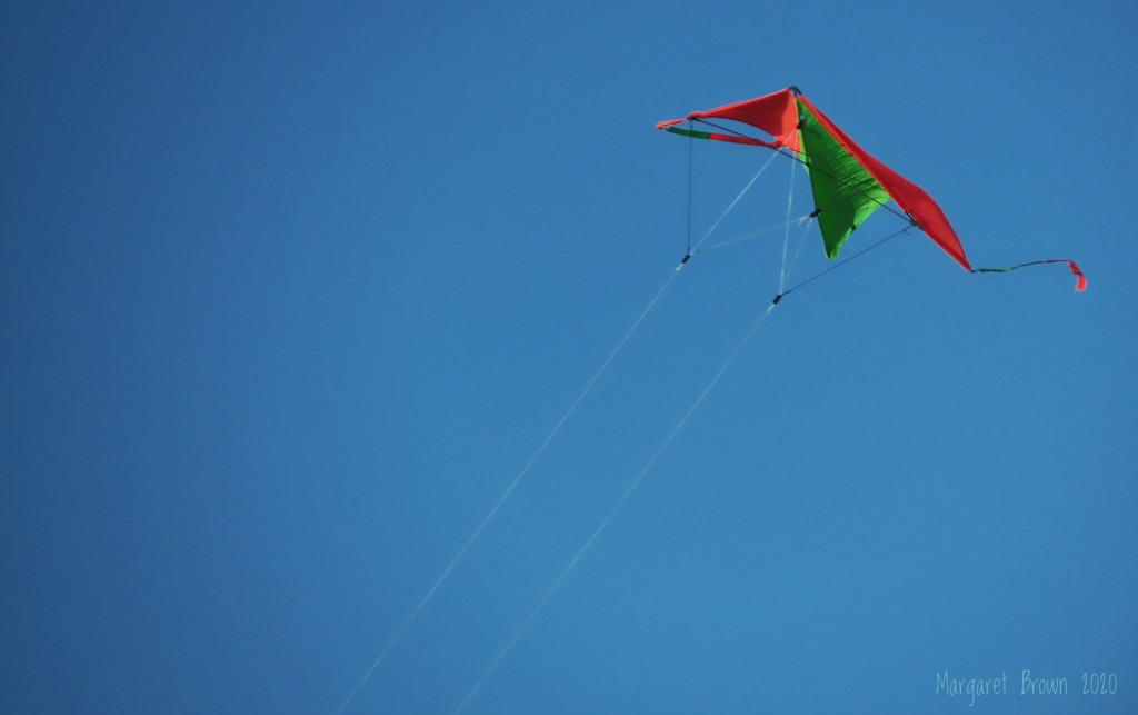 Flight by craftymeg