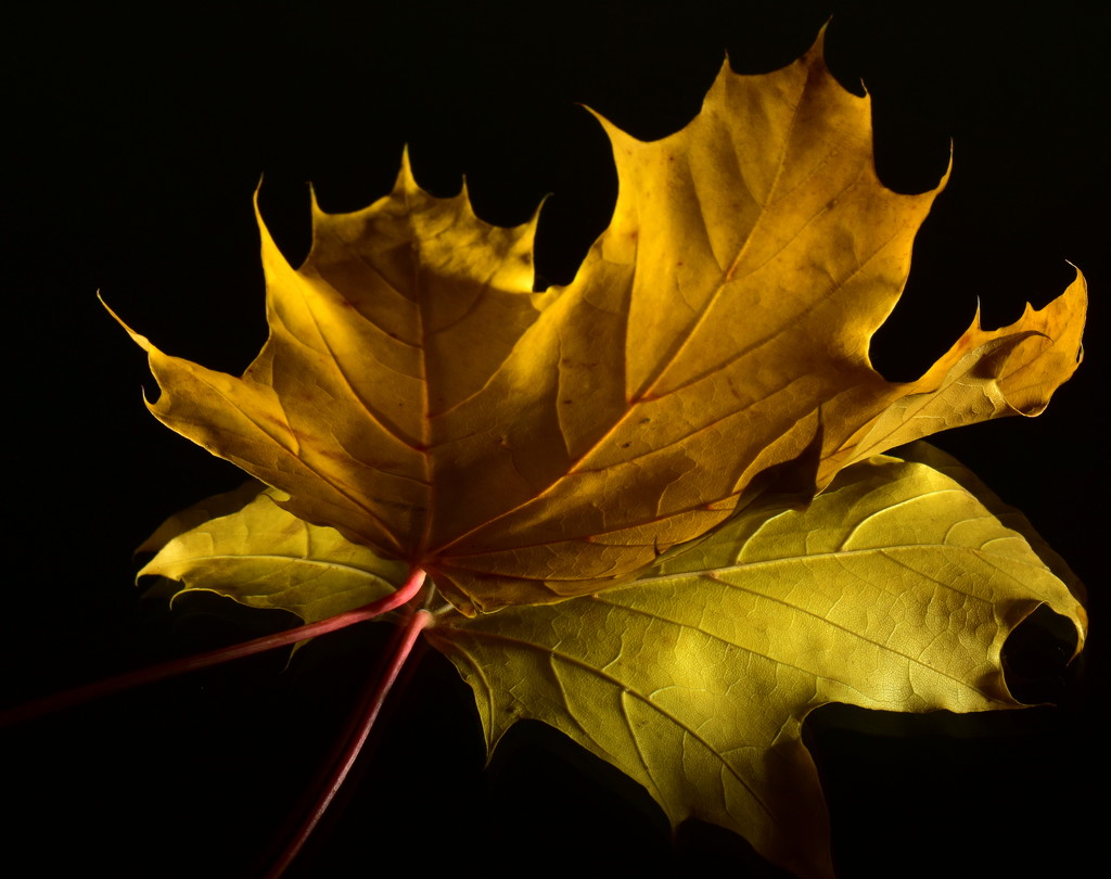 Autumn Leaves - Photographer's Joy by jayberg