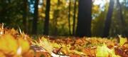 26th Oct 2020 - Autumn