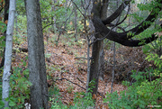 26th Oct 2020 - Wooded area long the walking path