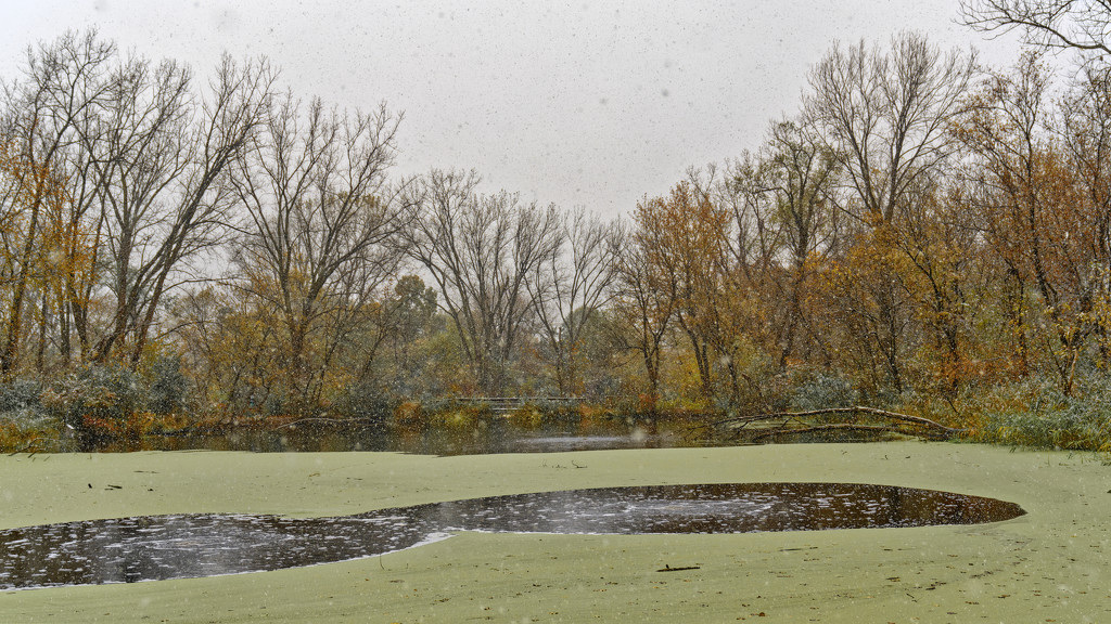 Snowing over the pond in Autumn by rminer