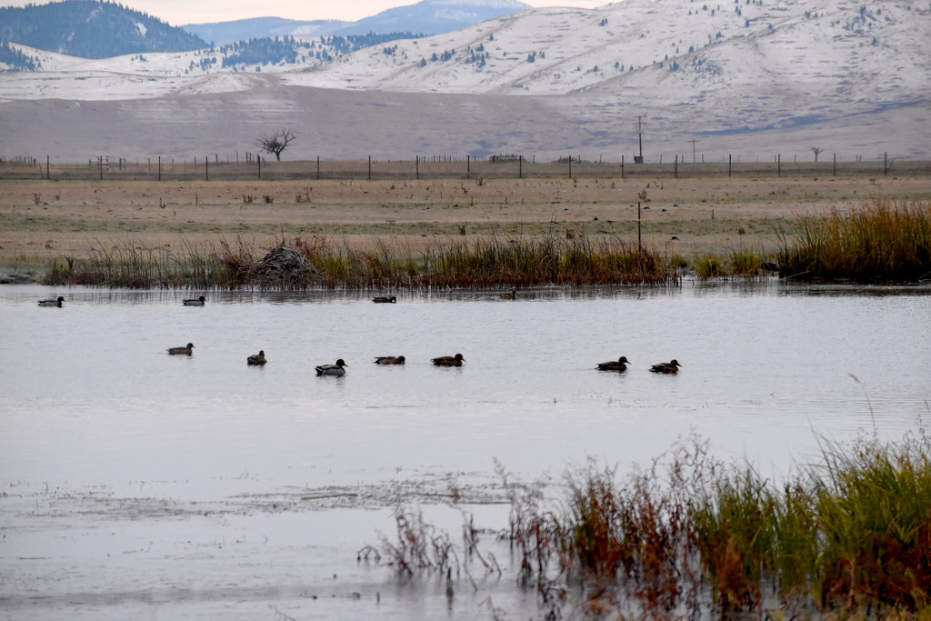 Migrating Ducks by bjywamer