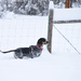 Trapper In The Snow