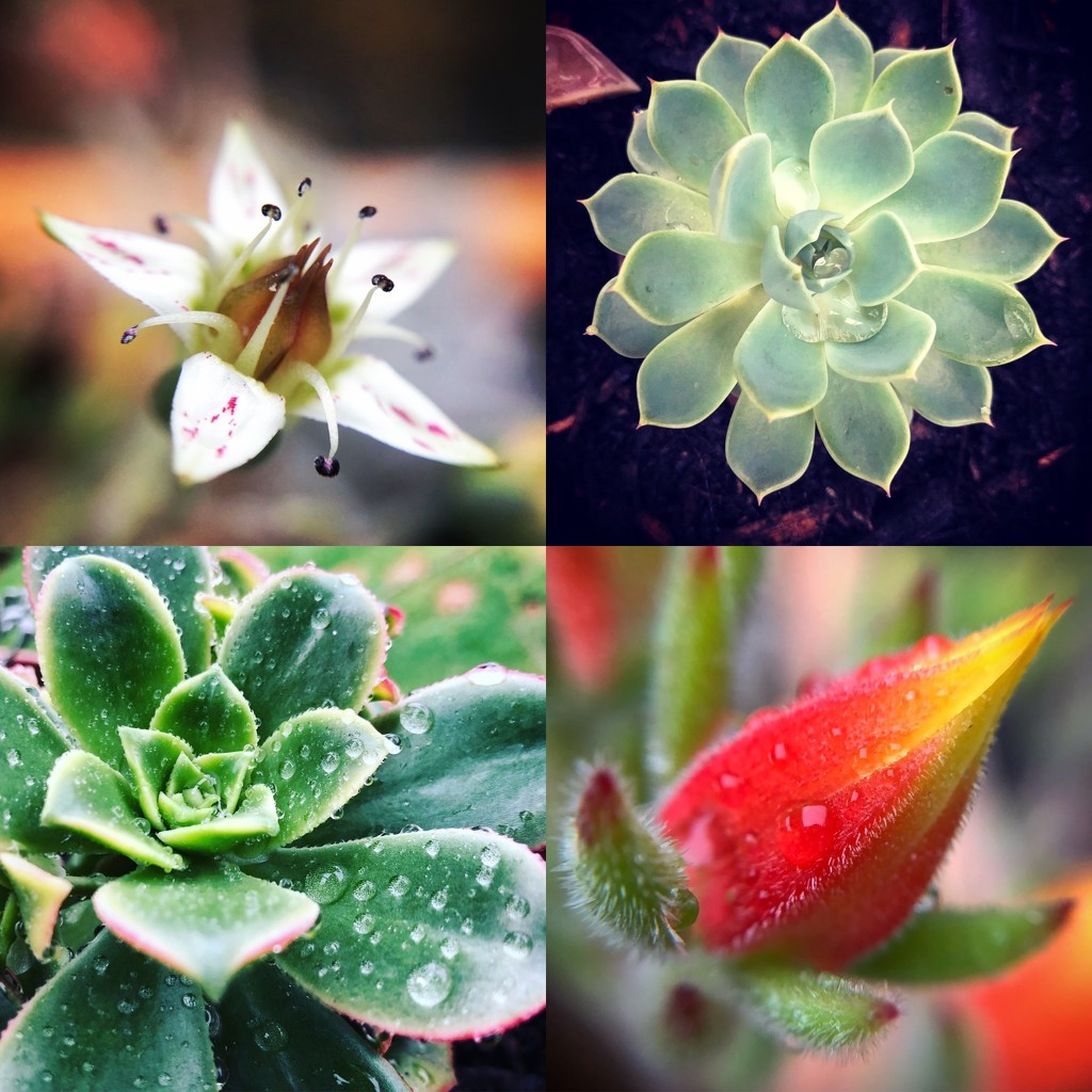 Succulents galore by abhijit