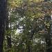 Painted wild dogwood...