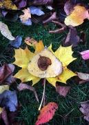 24th Oct 2020 - Autumn posy