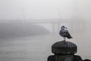 26th Oct 2020 - Birds love Burlington ...