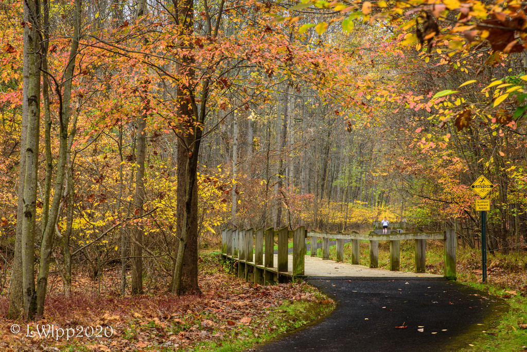 A Fall Day On The Trail by lesip