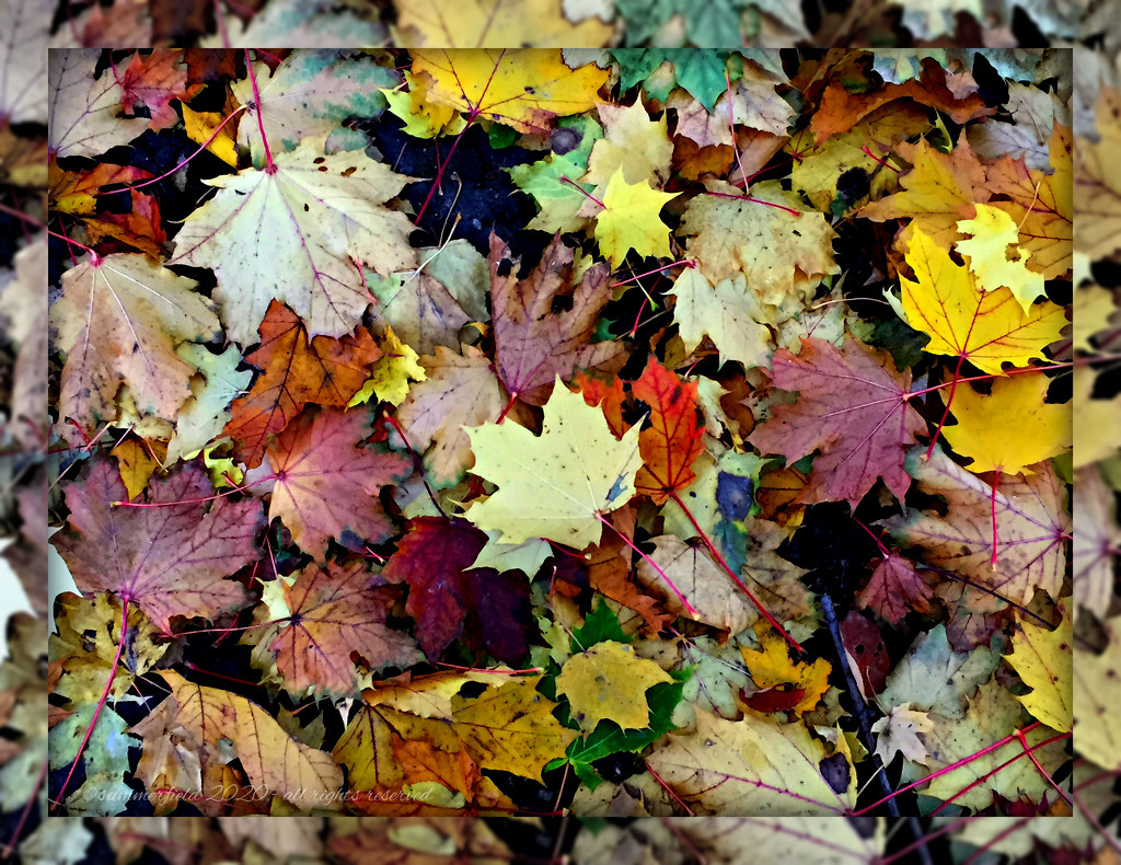 carpet of colours everywhere, two haikus by summerfield