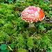 Cartoon Mushroom!