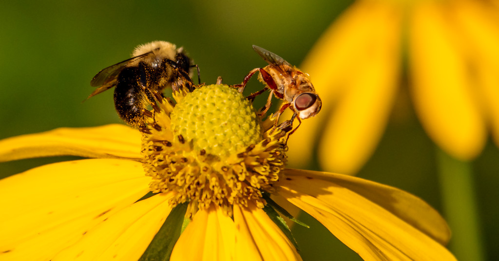 Bee and Fly! by rickster549