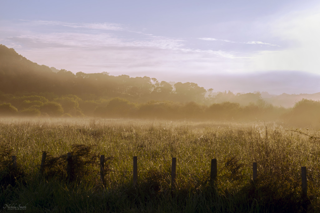 Morning Light by nickspicsnz