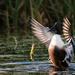 A quack stretch