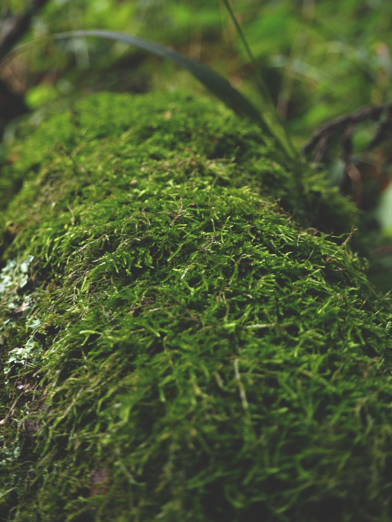 Some moss by monikozi