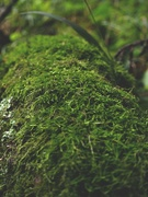 27th Oct 2020 - Some moss