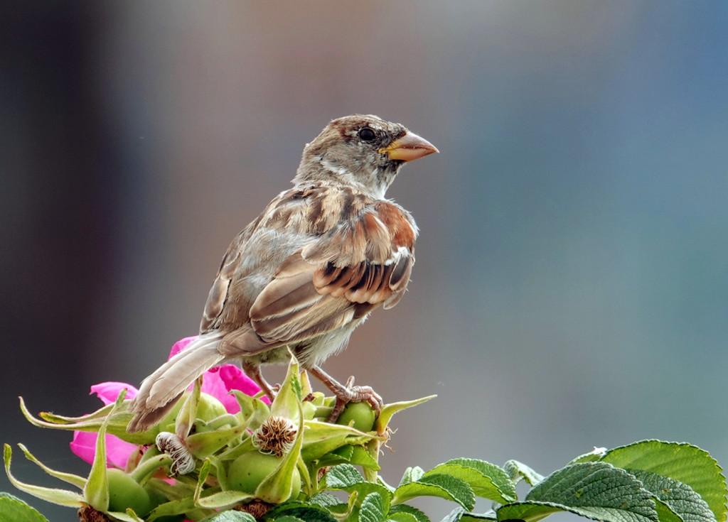 Sparrow by seattlite
