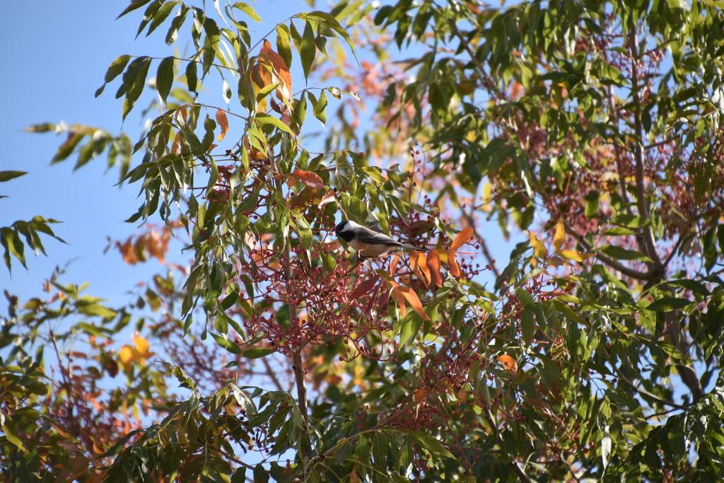Little Bird In The Fall by bigdad