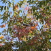 Little Bird In The Fall