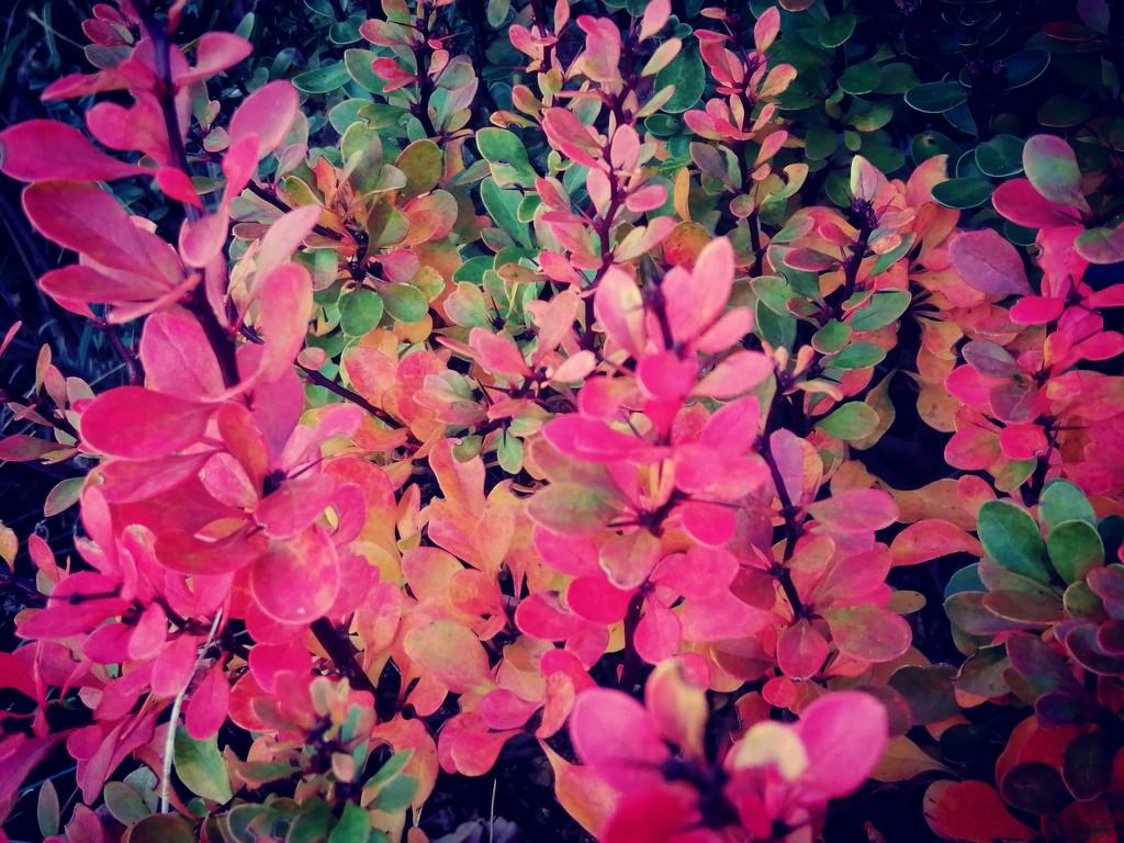 Autumn  by flowerfairyann