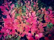 27th Oct 2020 - Autumn