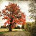 Autumn Surprises