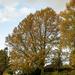 Splendid tree