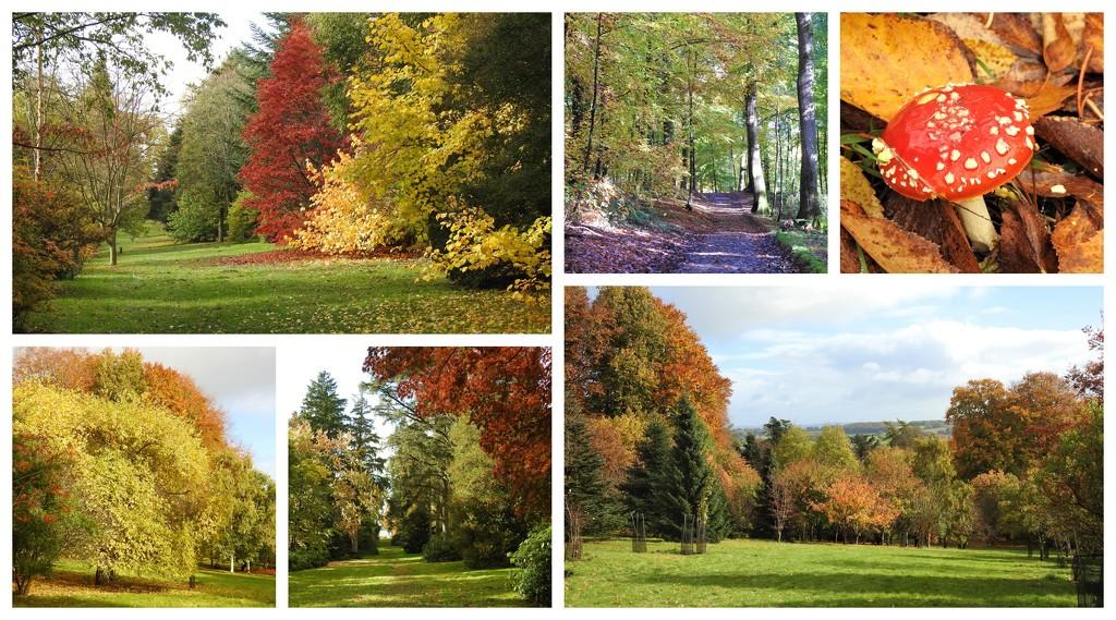 Autumn Walk at Hergest Croft  by susiemc