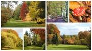 27th Oct 2020 - Autumn Walk at Hergest Croft