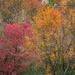 More Fall Colour