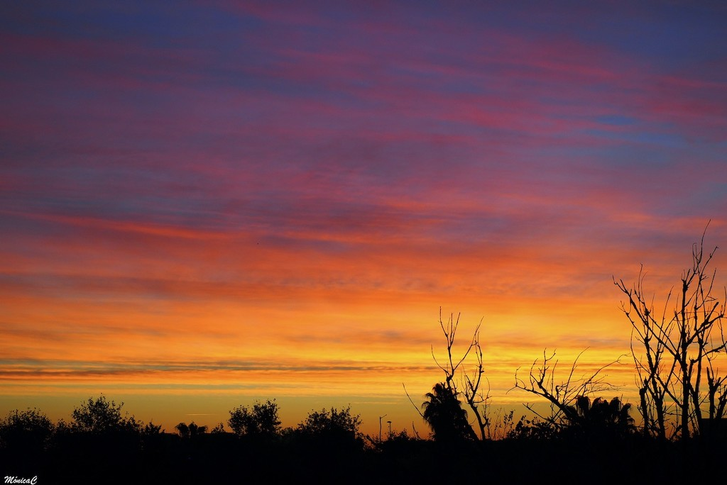 This morning's sunrise by monicac