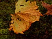 27th Oct 2020 - leaf on a log