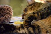 25th Oct 2020 - striped paws