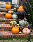 "28th Oct 2020 - A ""Gourd-Jus"" Display"
