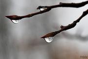 27th Oct 2020 - Rain ... rain ... go away