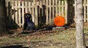 27th Oct 2020 - Seasonal yard art