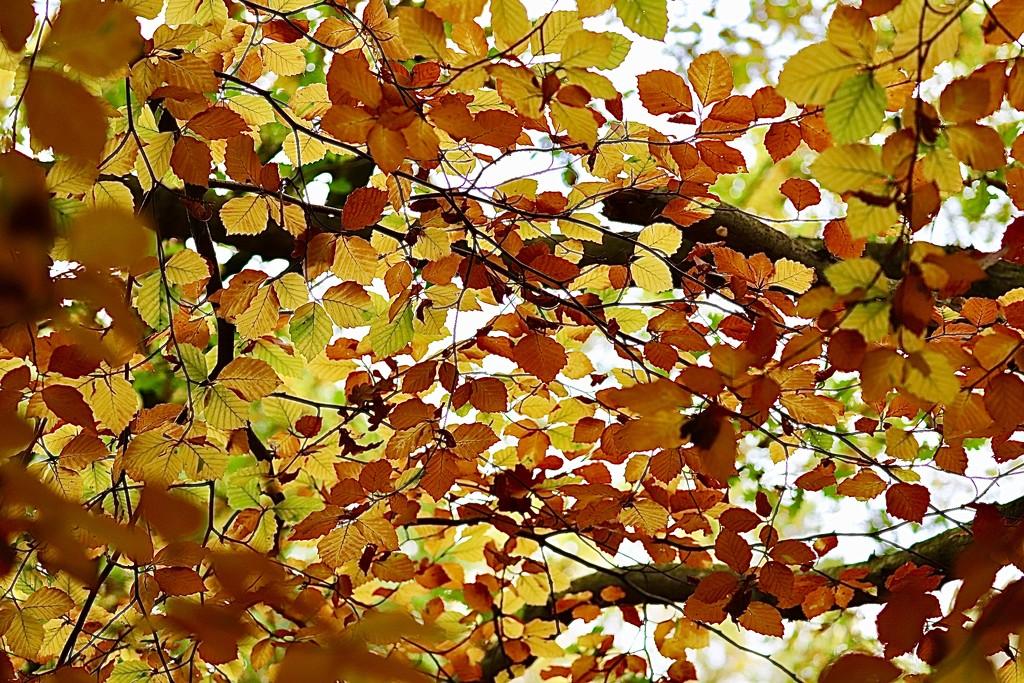 Red, Yellow, Orange & Green by carole_sandford