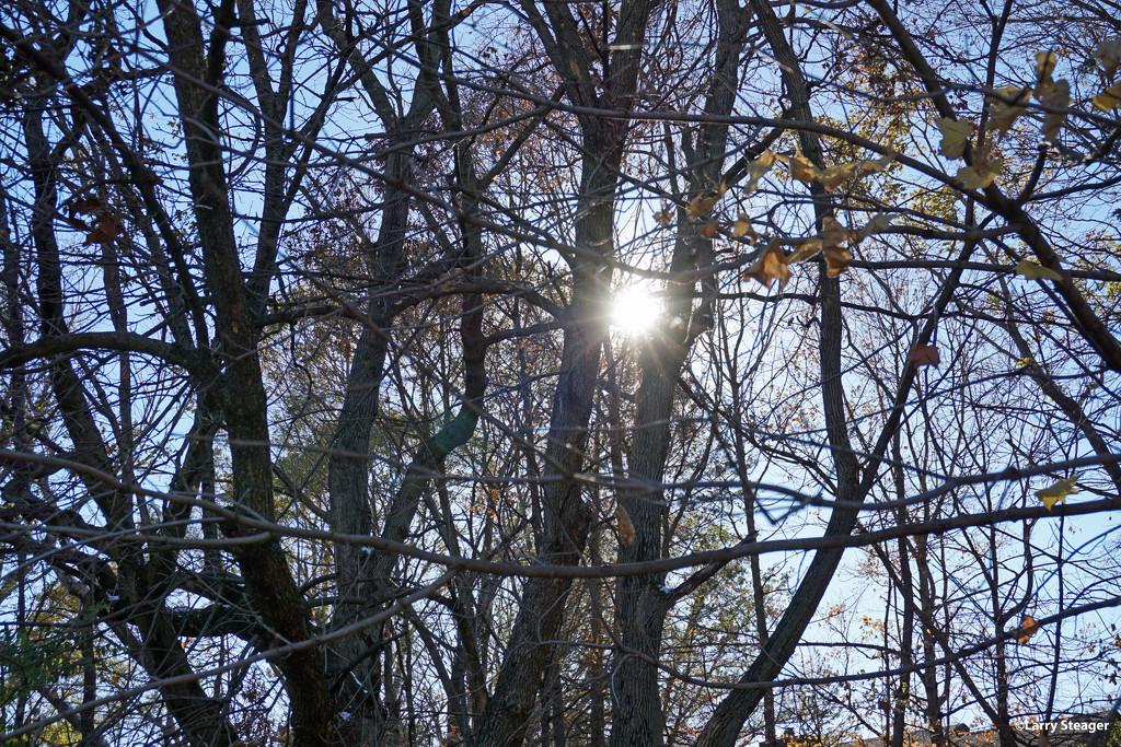 Fall sun flair by larrysphotos