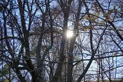 27th Oct 2020 - Fall sun flair