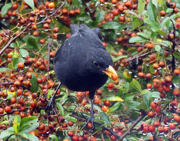 24th Oct 2020 - A berry wet day