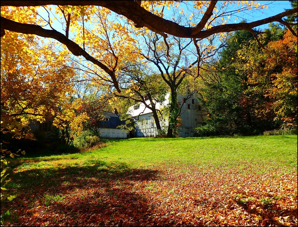 The Grand Old Lady in Autumn by olivetreeann