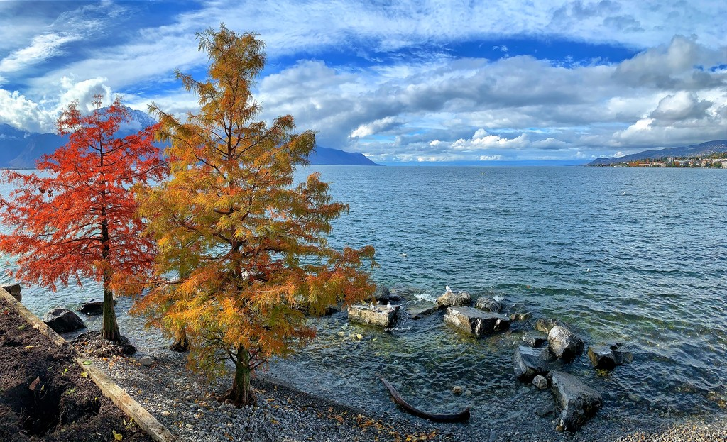 Two trees by the lake.  by cocobella
