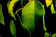 24th Oct 2020 - (Day 254) - Dew It