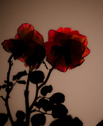 25th Oct 2020 - (Day 255) - Crimson